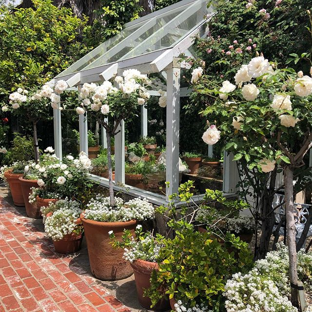Inspired by this garden @stellamccartney for our next project. We love an all white & green garden #gardendesign #roses #gardenparty