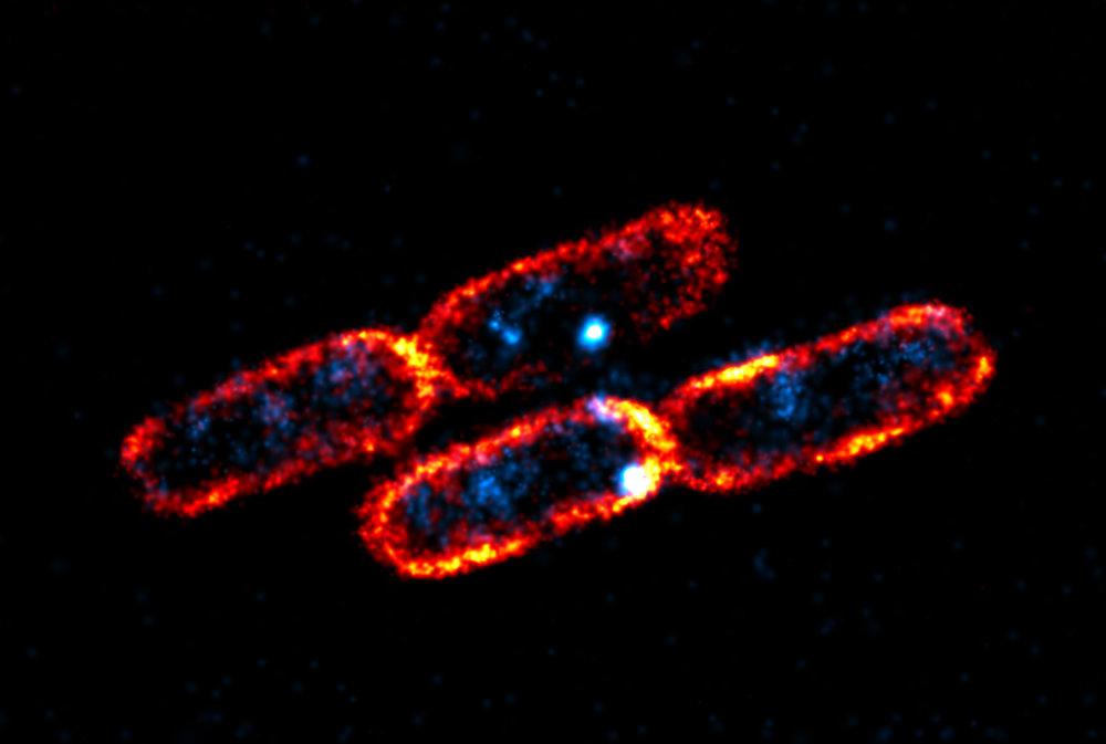 LacY_epsilon_pretty_cells (1).jpg