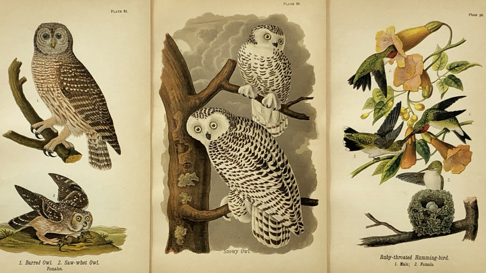 antique prints - We specialize in antique prints. We have a great collection of Birds, Botanicals, and Civil War prints, and so much more.