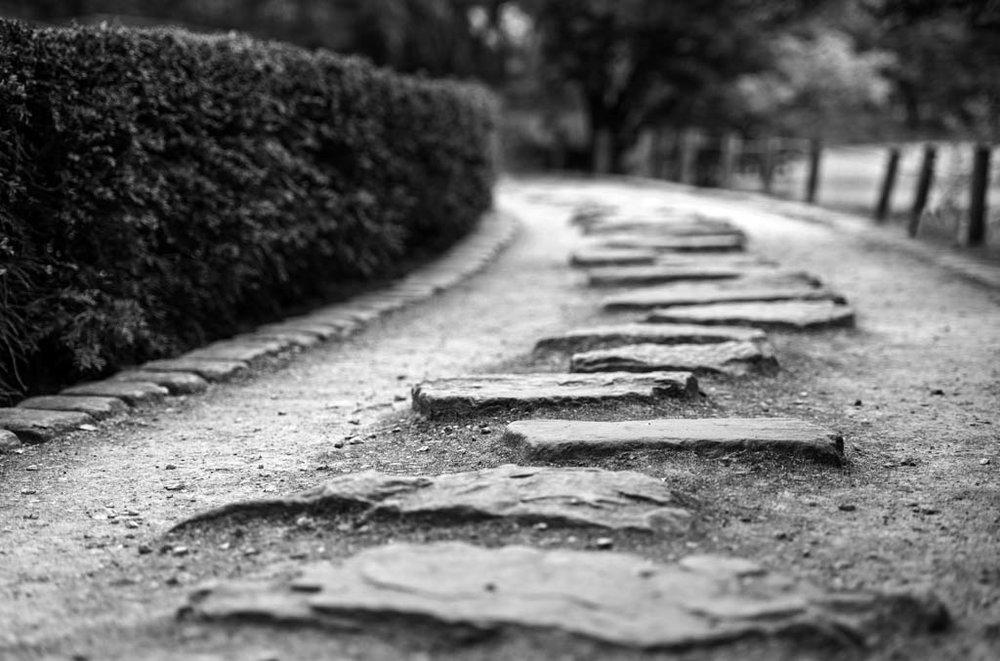 Stepstones - Mijn ontdekkingstocht richting 'zien'