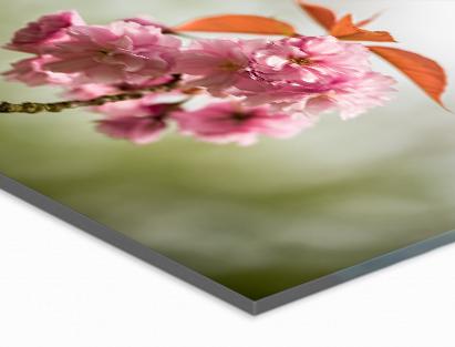 Highlights  Echte fotokwaliteit  Het mooiste Fuji fotopapier voor een sublieme kleurweergave  Het helderste acryl met bijzondere dieptewerking  Glashelder gepolijste randen  Jarenlange bescherming van uw beeld