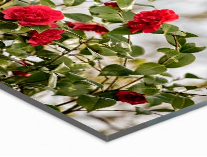 Highlights   Optische diepte  Perfecte glans  Kristalhelder acrylglas  3D-effect voor stralende motieven  Natuurlijke UV-bescherming