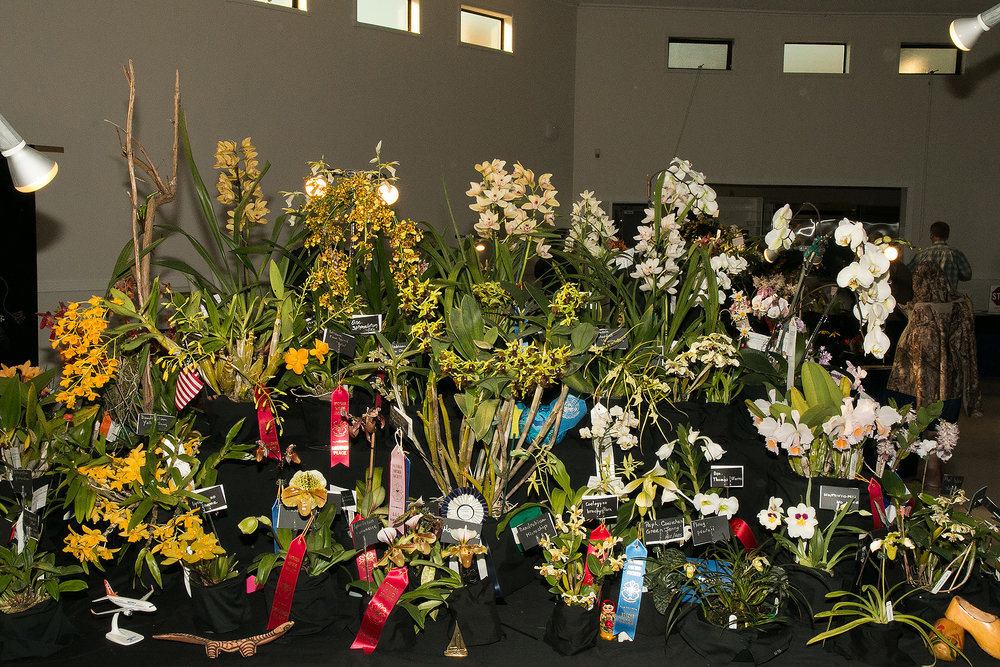 Victoria Orchid Society Display