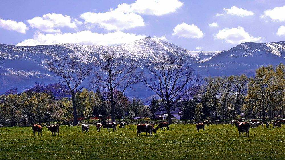 krkonose-giant-mountains-3783433.jpg