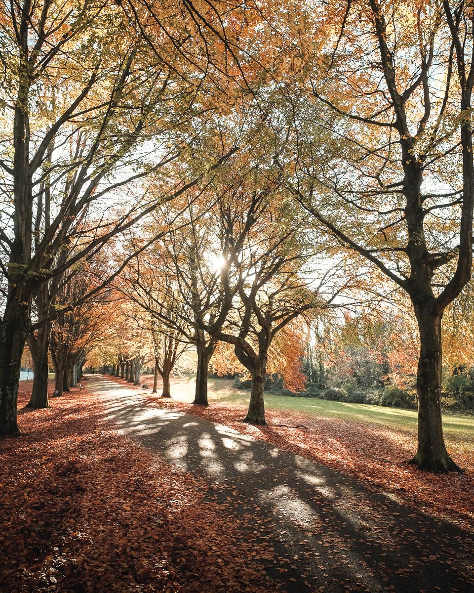Edd Cope - Bristol Autumn