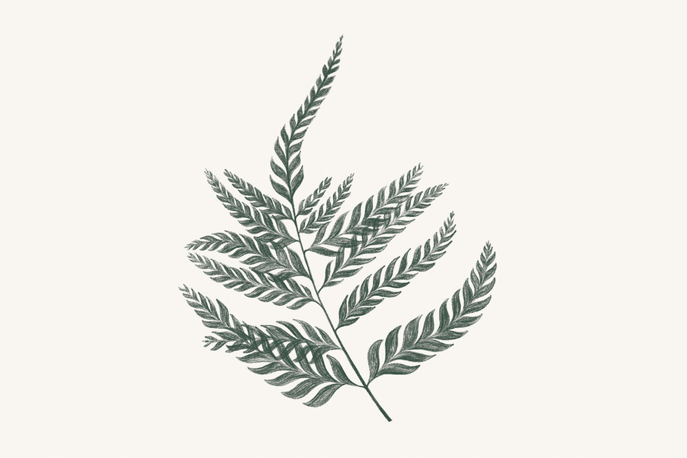 Ferns_Invite_5x7_onWhite-graphicforWeb.jpg