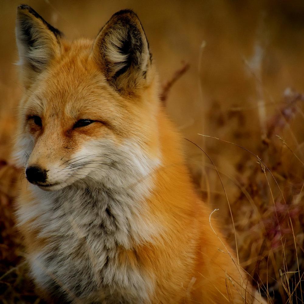 watch wildlife -