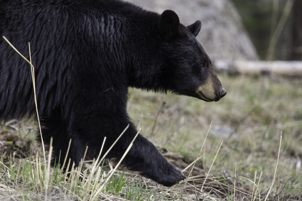 Click here for bear safety info from Colorado Parks and Wildlife.