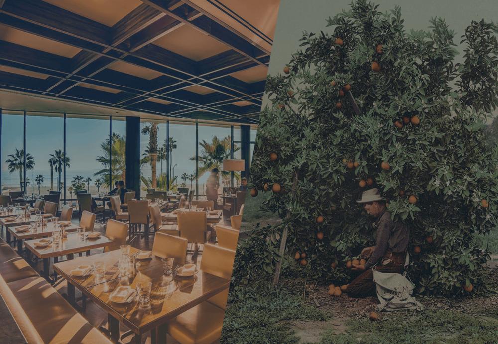 Dining Room and Orange Tree
