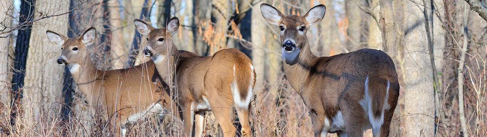 3-deer-banner_1440x407.jpg