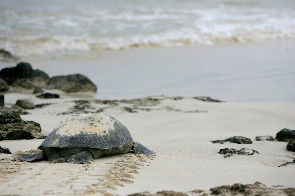 galapagos_sea_turtle.jpg