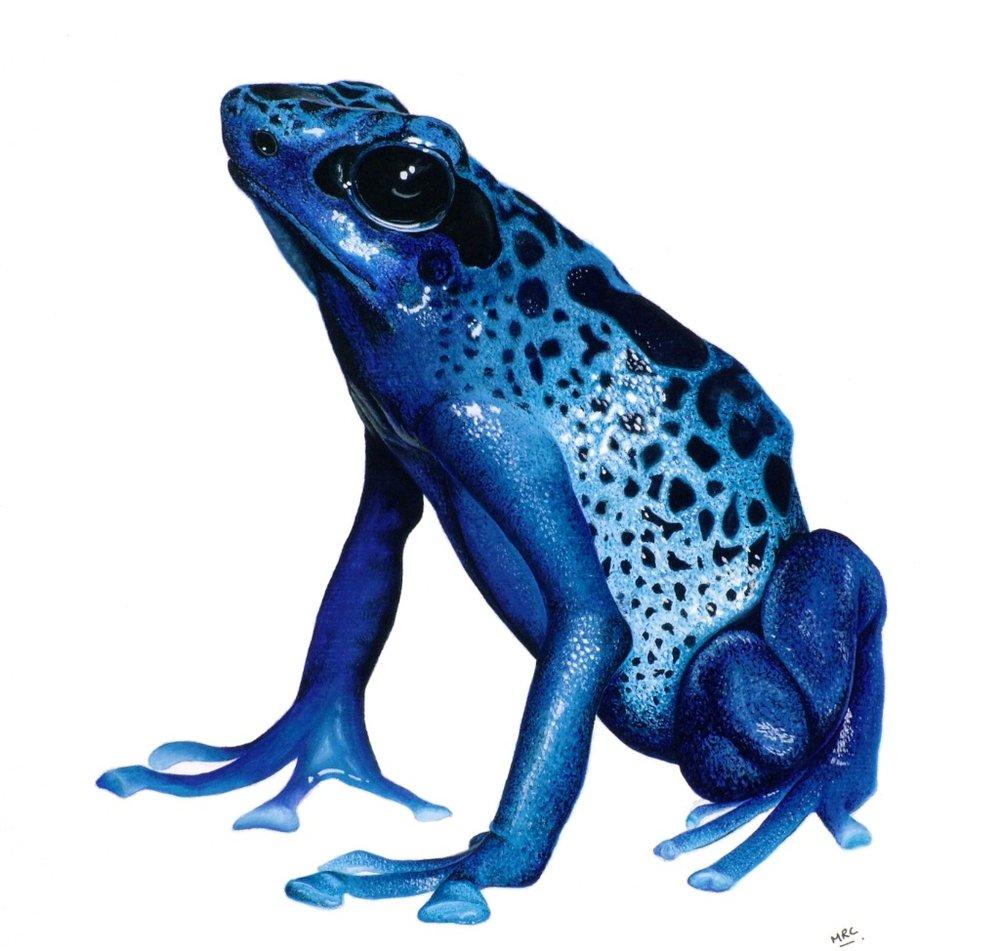 """Rainforest Blue""   Original - £250 -   Sold    Image 24 x 21 cm  Signed Print £25"