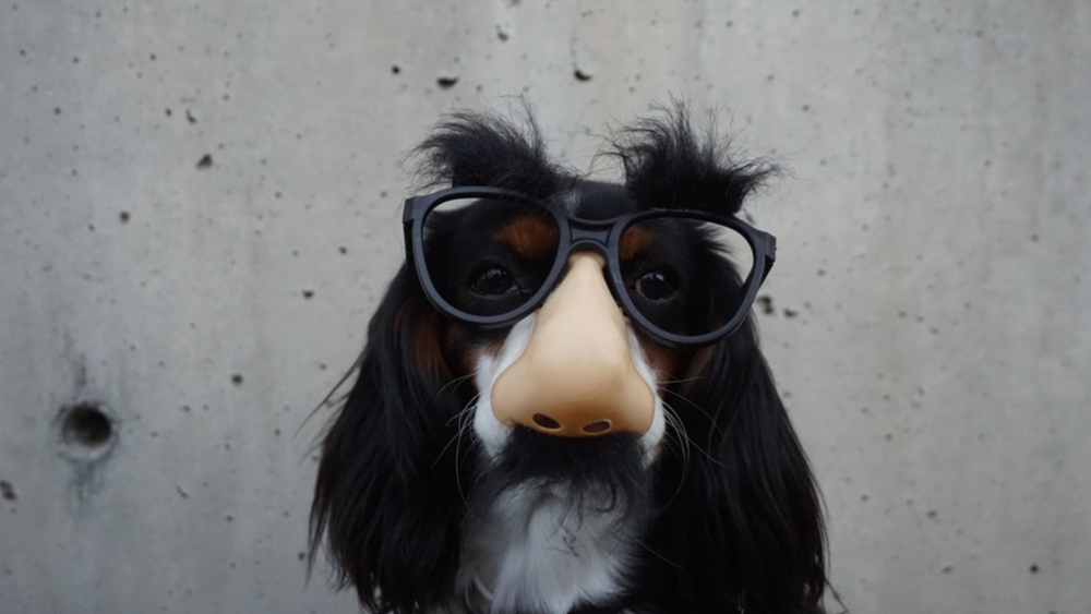 Dog Glasses.png