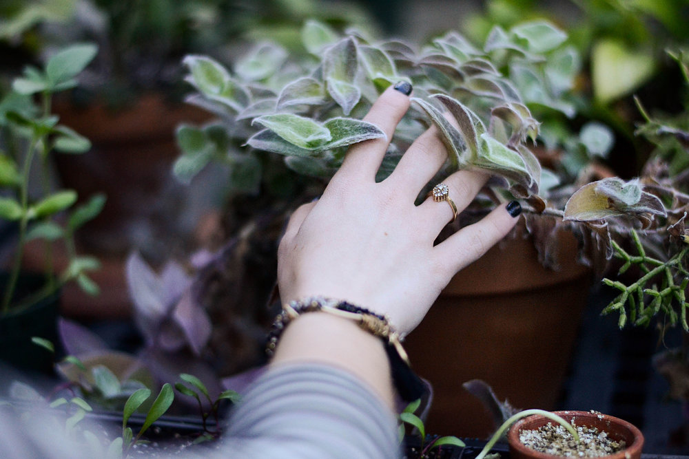 Intuitive Herbalism - Remembering How to Listen to the Plants - with Erin Smith