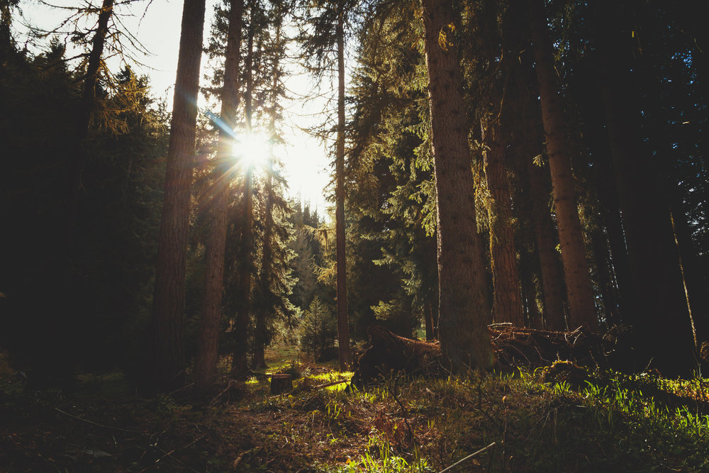 The Sacred Folklore of Trees - with Sara Stewart Martinelli