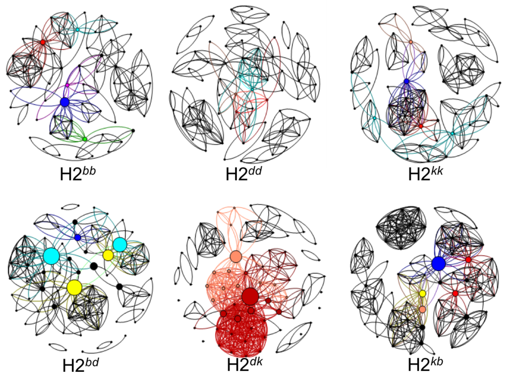 Microbial network analysis of the 'core' fecal microbiota of MHC congenic BALB/c mice.  Notice the more complex interactions (represented by the number of lines connecting dots (ie. species) within MHC heterozygote communities (bottom row). In a forthcoming manuscript we discuss the possibility that MHC heterozygosity may be favored evolutionarily by promoting a more beneficial microbiome. H2 refers to the mouse MHC region and the superscripted characters denote H2 haplotypes.