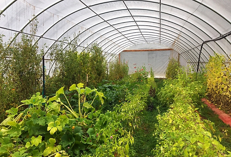 """Hoop house plants getting ready to enter """"Persephone Period"""""""