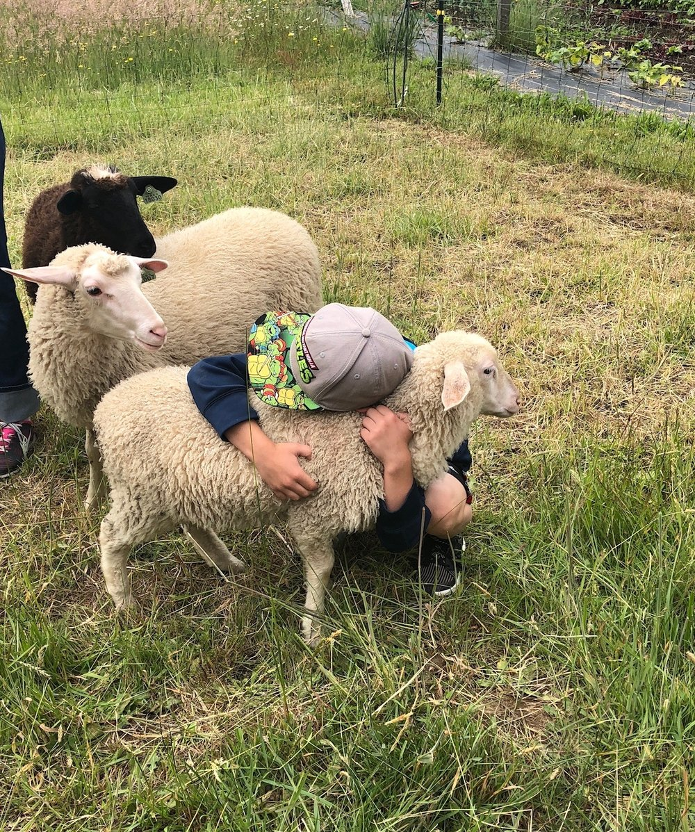 One of my cousin's boys fell in love with the lambs - especially the little one.