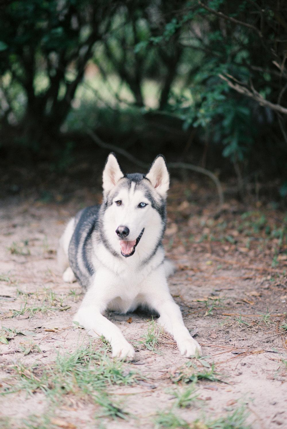 01 - Pets