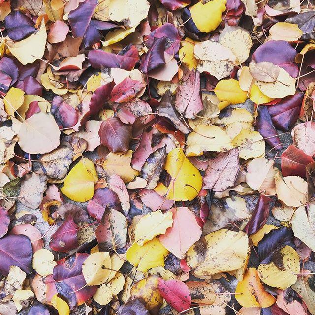 Leaf peepin'.