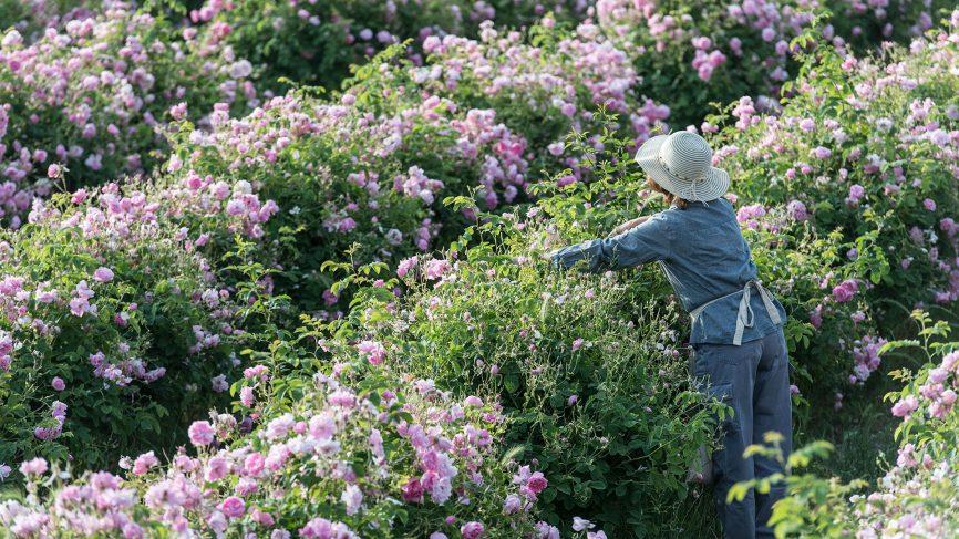 Grasses Roses .jpg