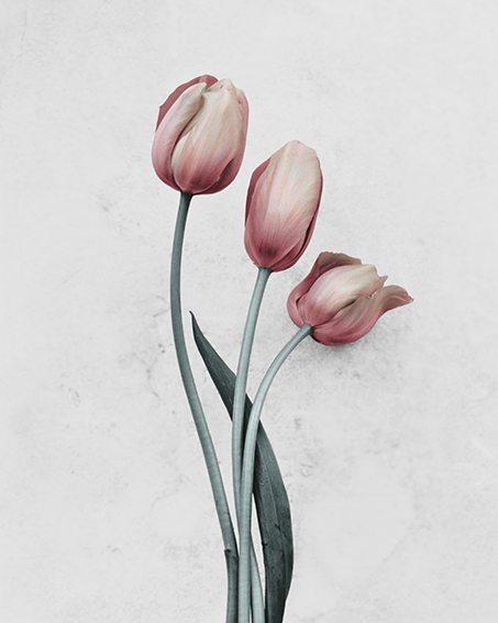 fleur_2203162.jpg