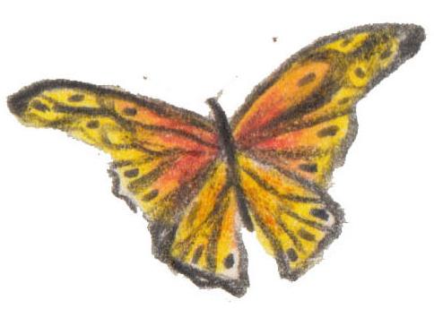Mice-and-butterflies-catherine-rayner-faqs.jpg