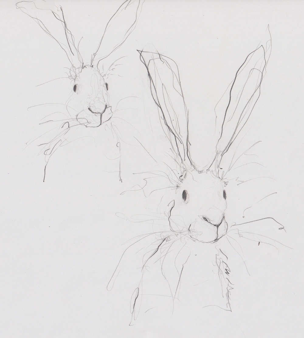 Hare doodles