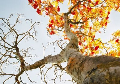 Autumn-Tree-via-FFFFound1