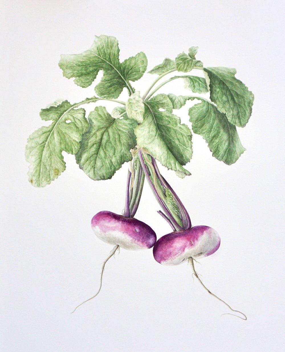 Blaencamel Turnips