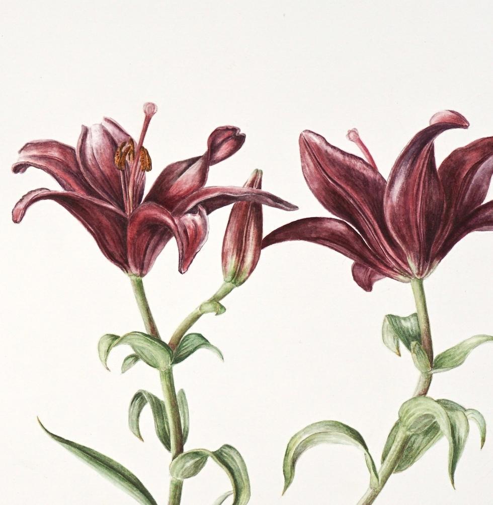 Lilium landini