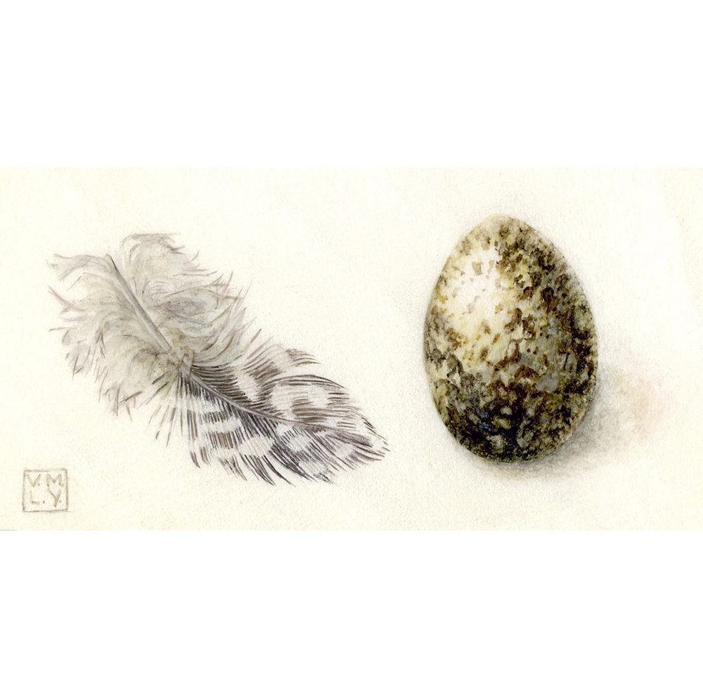 Feather, Egg