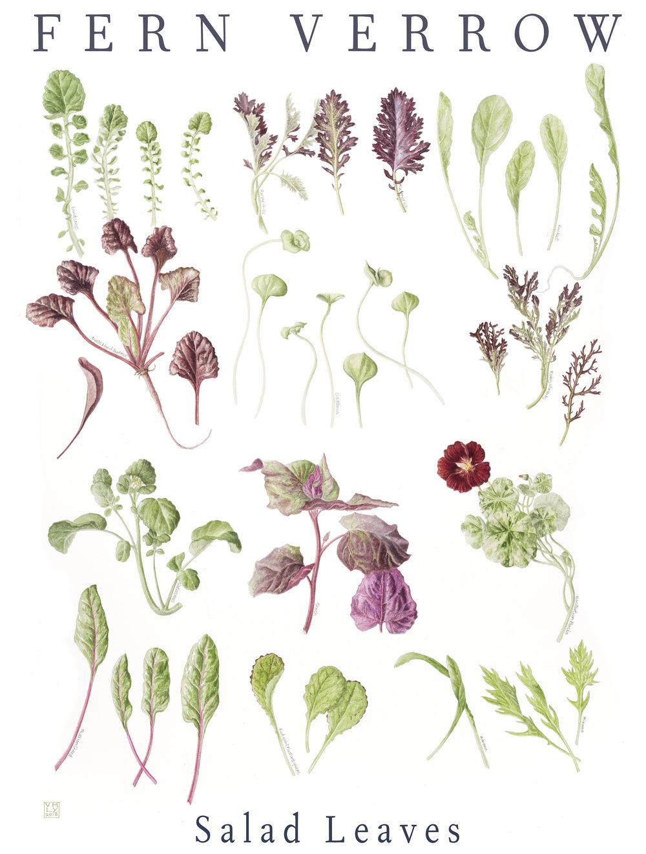 Fern Verrow  - Salad Leaves