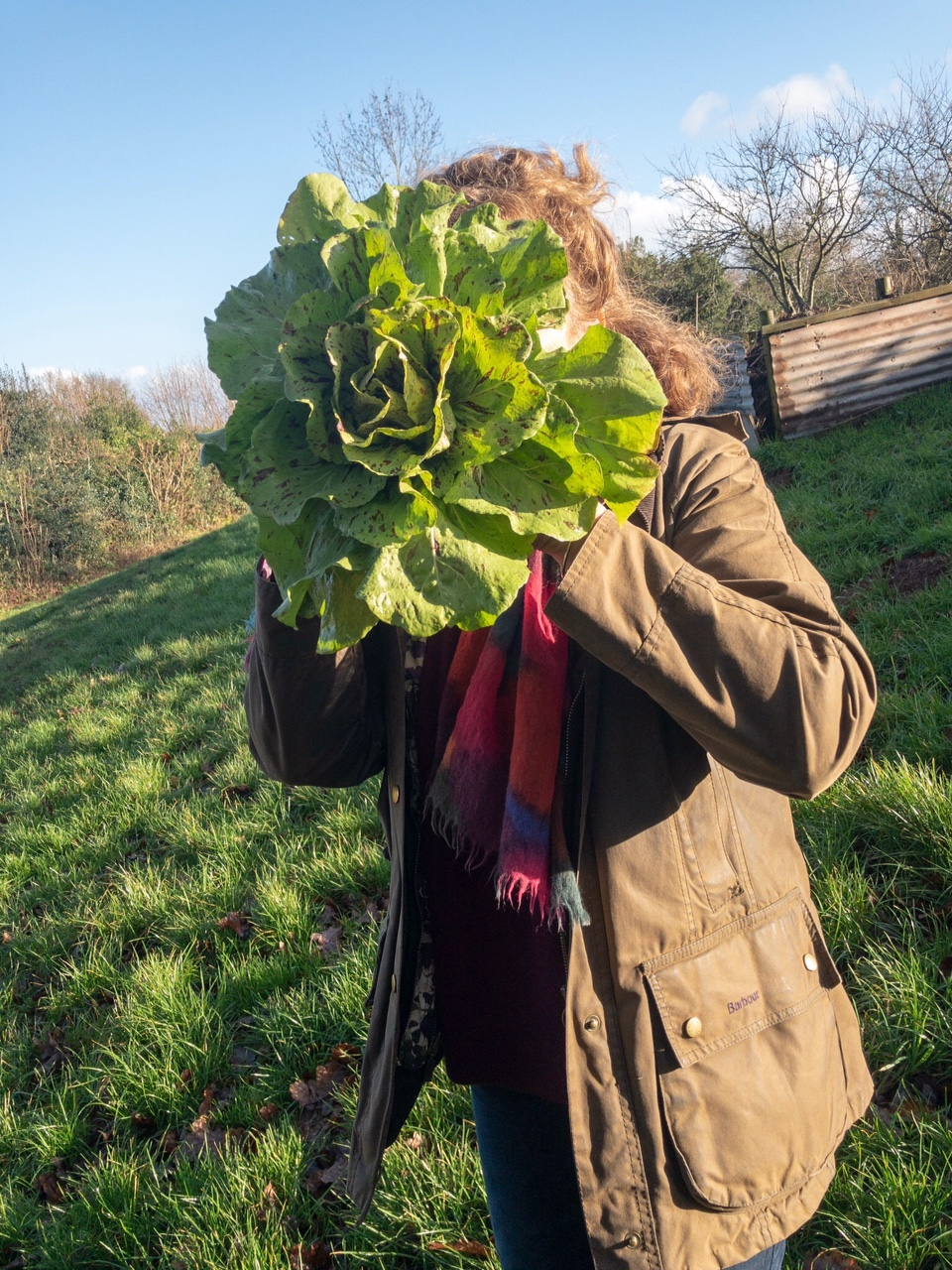 'Castelfranco' and me, down on the farm.