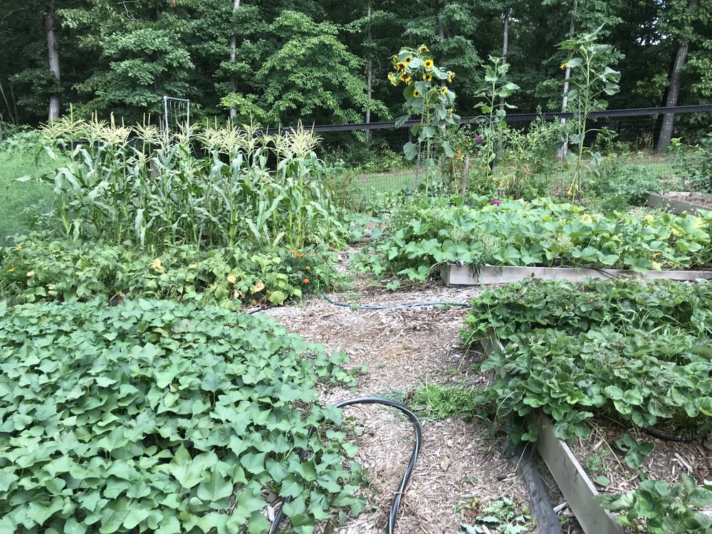 A look back at the garden from this year! So much green!