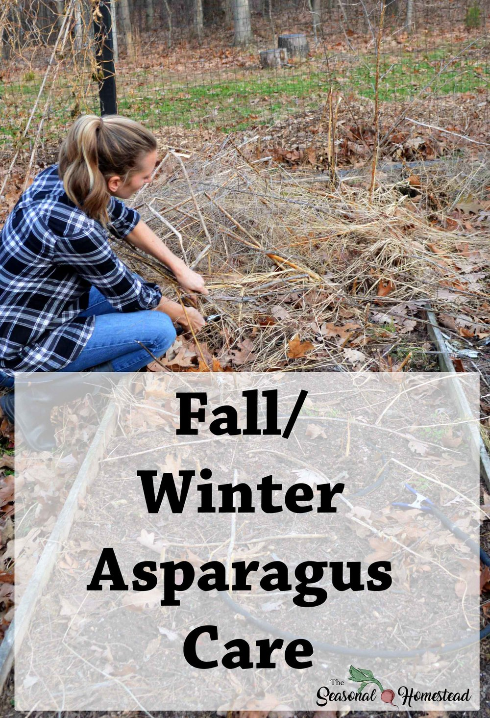 Fall-winter-asparagus-care.jpg
