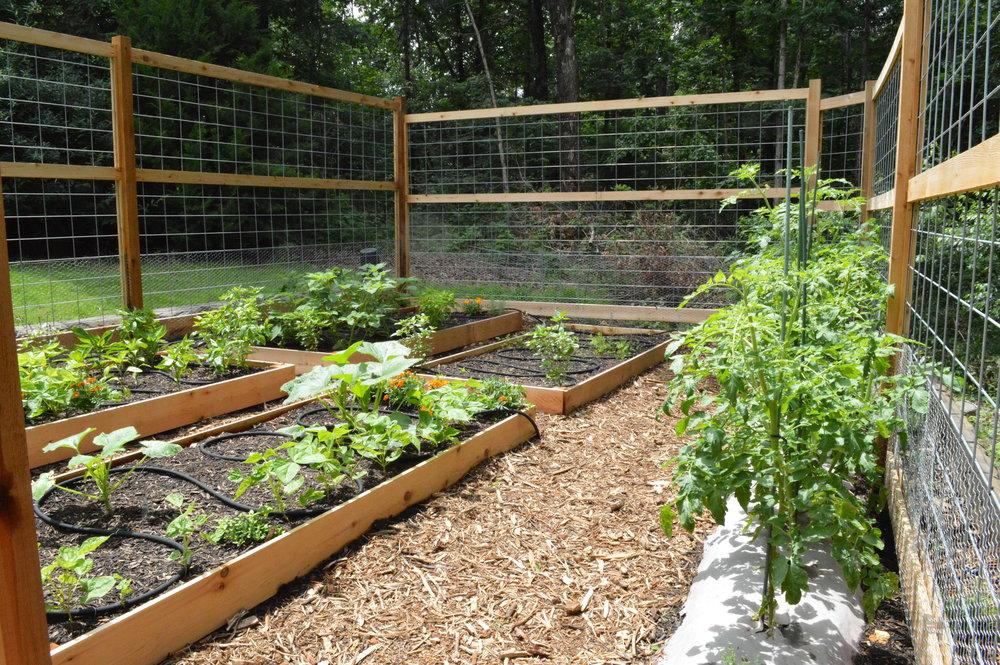 My Backyard Garden 2014