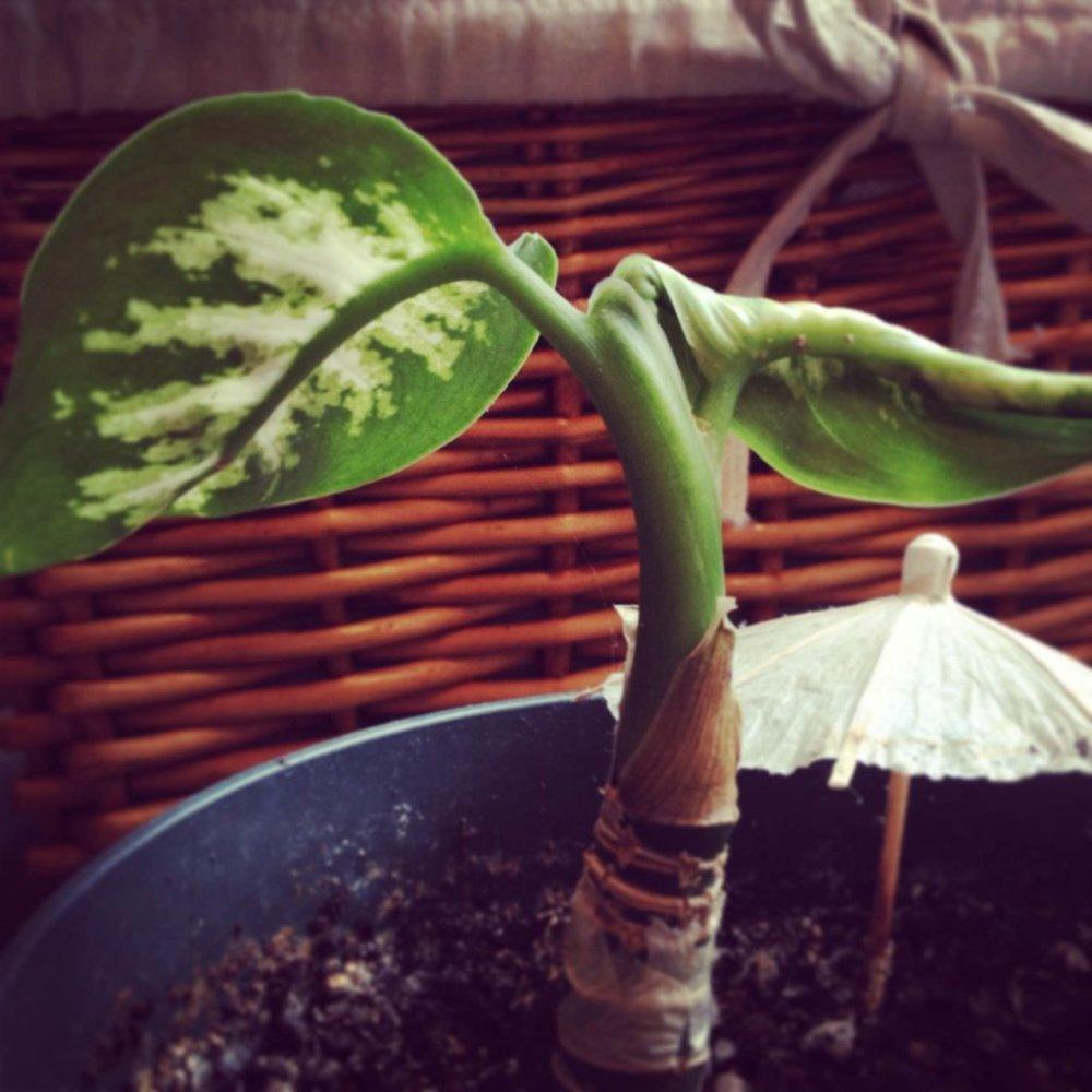 Plant-growing-1024x1024.jpg