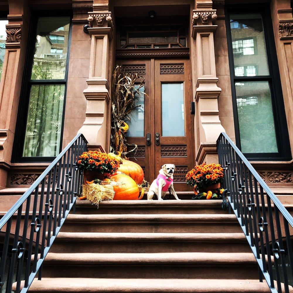 Autumn 🍂 in NY (10/2017)
