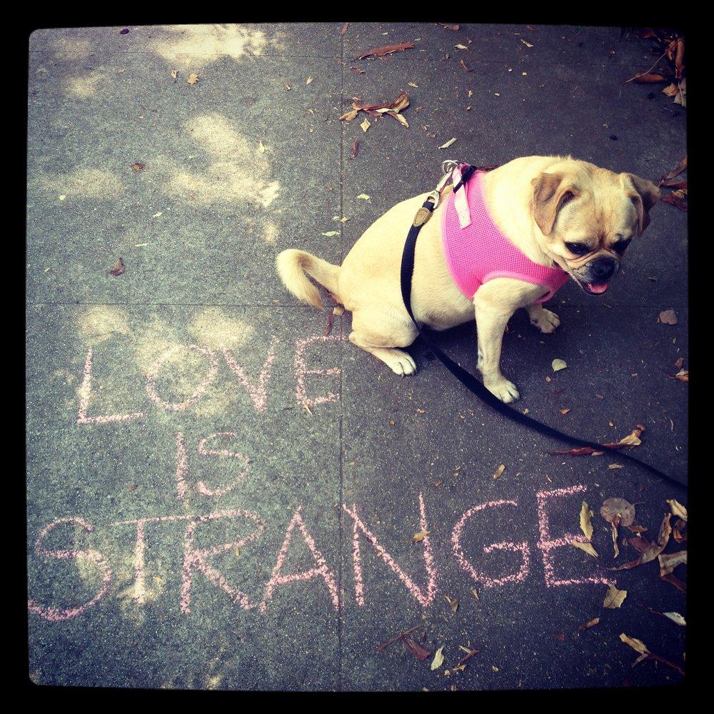 Love is Strange, LA 2013