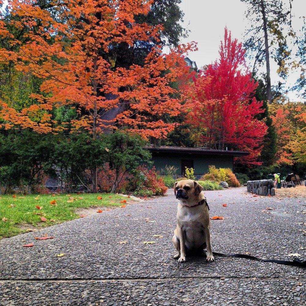 Fall in Ashland, OR 2013