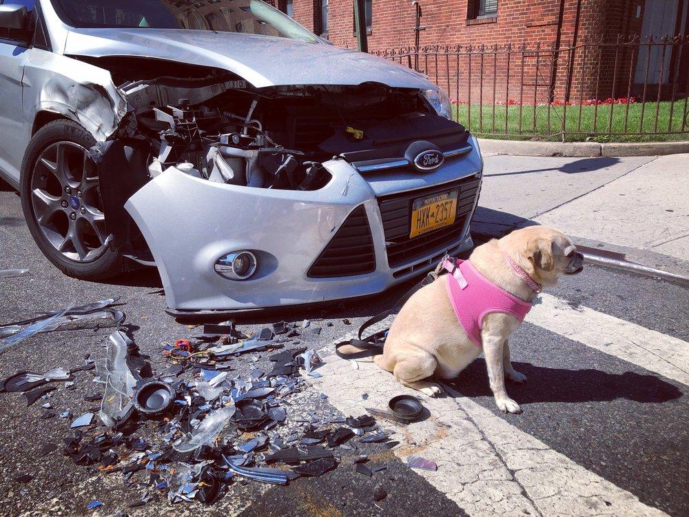 Poops, I did it again! 🐕💨 Guess I need to cut back on those 🌮🌮. Ummmm ... sorry ... again? (Brooklyn 7/2018)