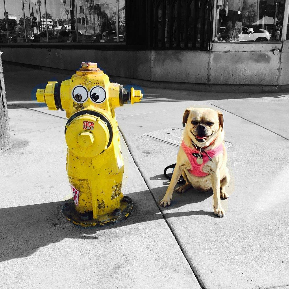 One-sided Friendship (LA 2015)