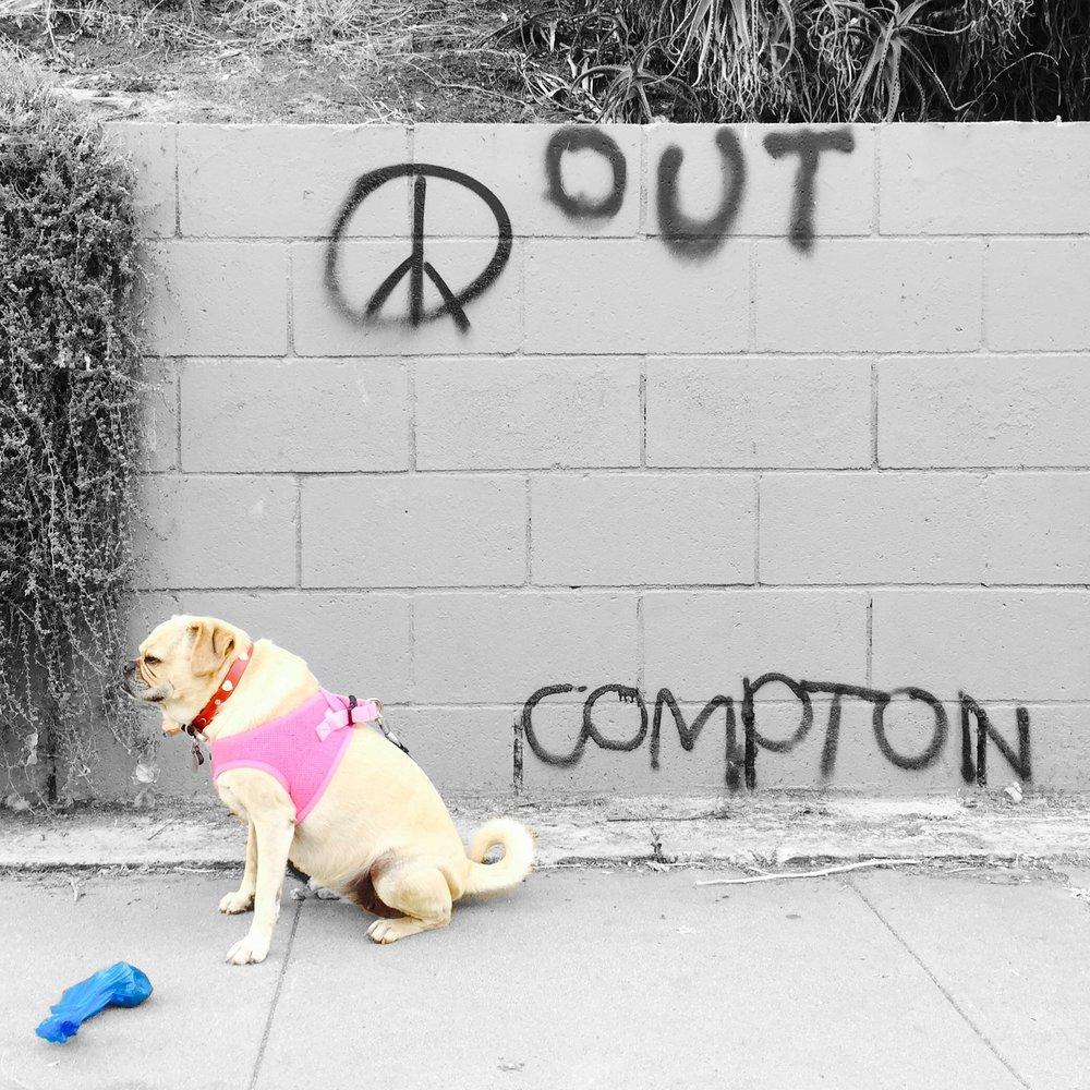 Pug(gle) Life (LA, 2015)