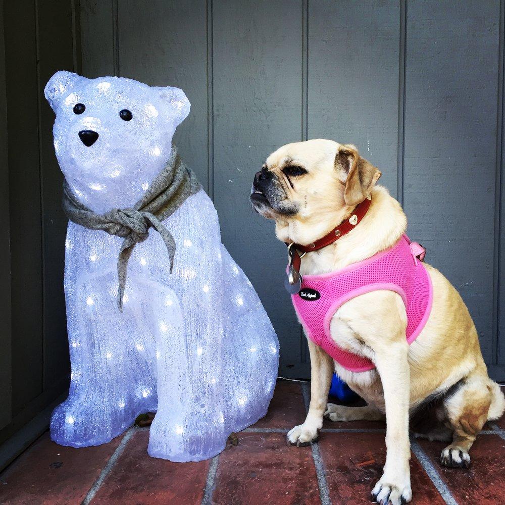 Polar Puggle! (LA, 2015)