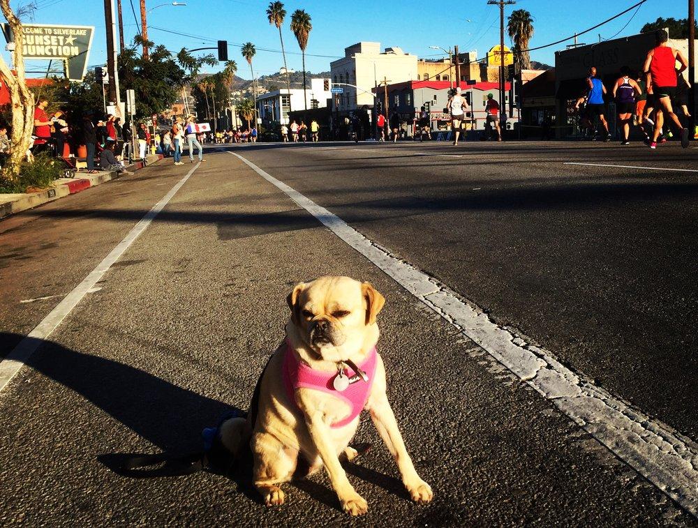 I ❤️ running. (LA Marathon 2016, Silverlake)