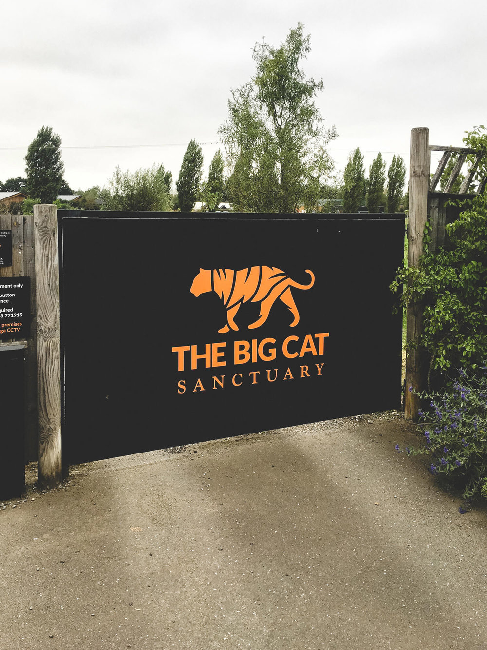 big_cat_sanctuary_©_20x24_studio_berlin-1.jpg