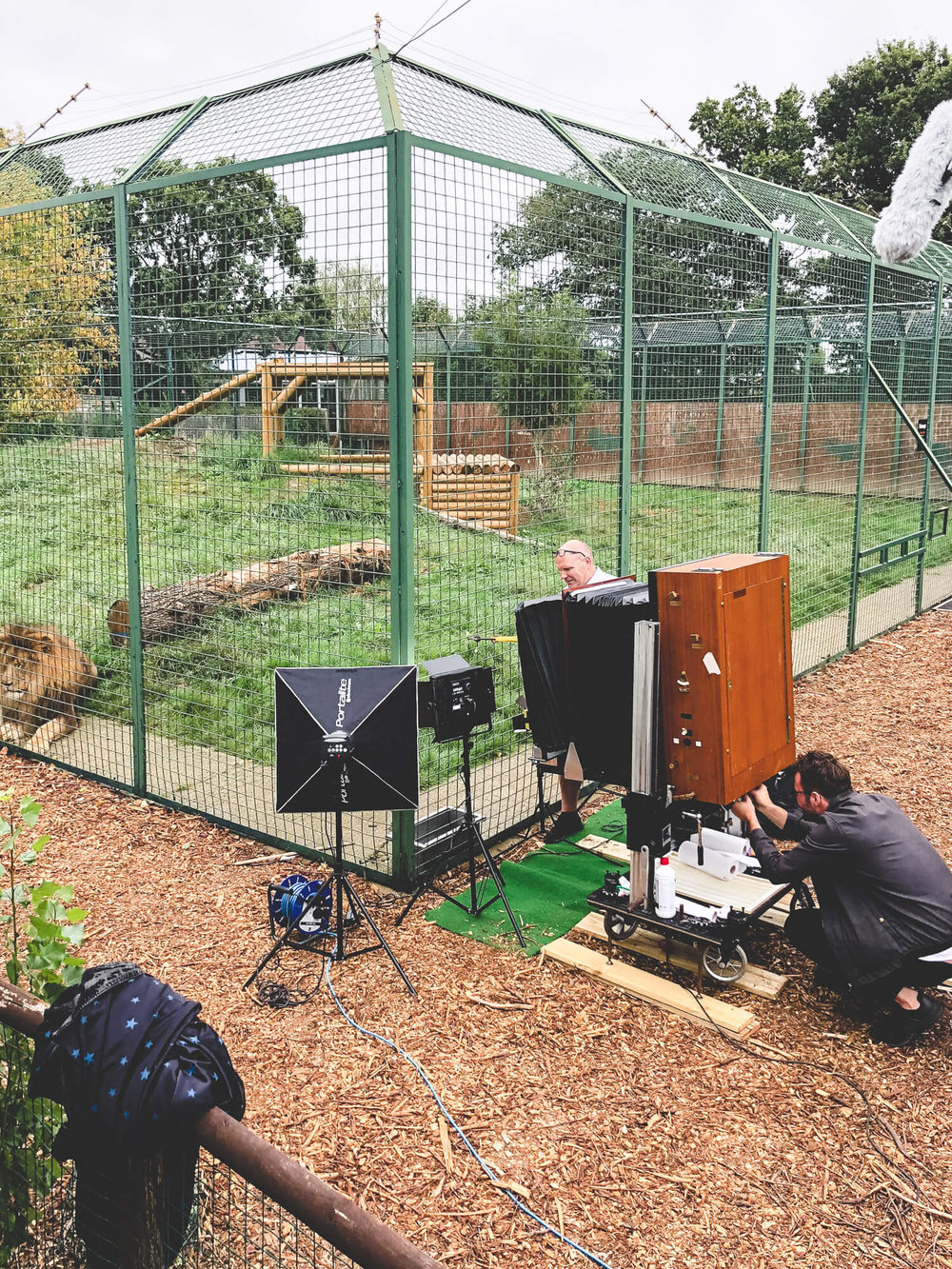 big_cat_sanctuary_©_20x24_studio_berlin-7.jpg