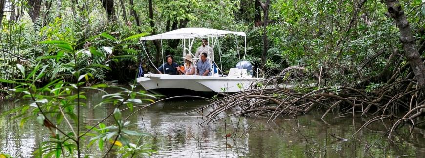 drake bay swamp.jpg