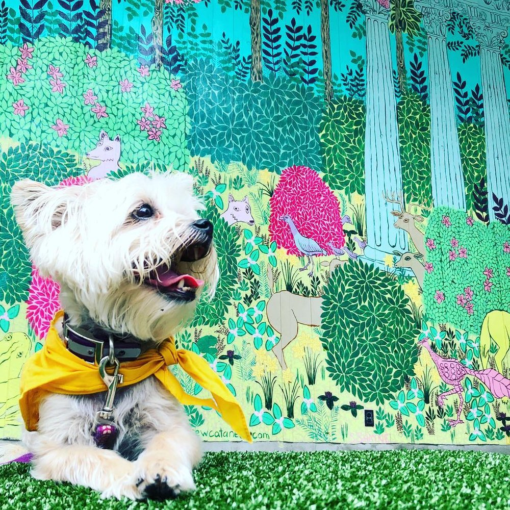 """I would like to think that the little white fur friend peaking out from behind the bush was inspired by me 🎨🐶 Stop by  @midtown_atl MARTA station to soak up some flower power this weekend! Happy Friday!🌳🌸🌼🌿"" –@  k9dines"